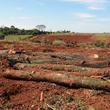 Thumb_deforestaci_n.png