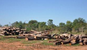 Featured_deforestacion.jpg