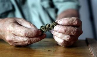 Featured_marihuanauy.jpg