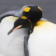 Thumb_pinguinos.png