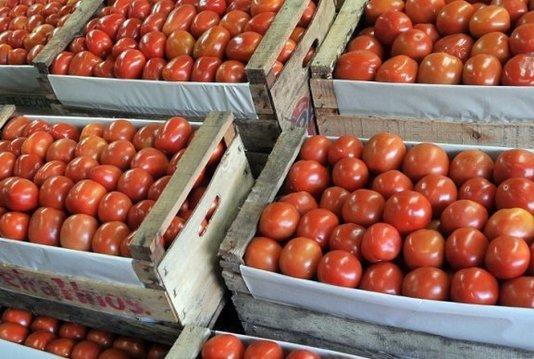 original_tomate.jpg.jpg