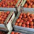 Thumb_tomate.jpg