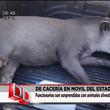 Thumb_tapir.png