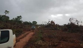 Featured_deforestaci_n.jpg