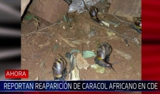 Featured_caracol.jpg
