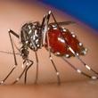 Thumb_mosquito.jpg