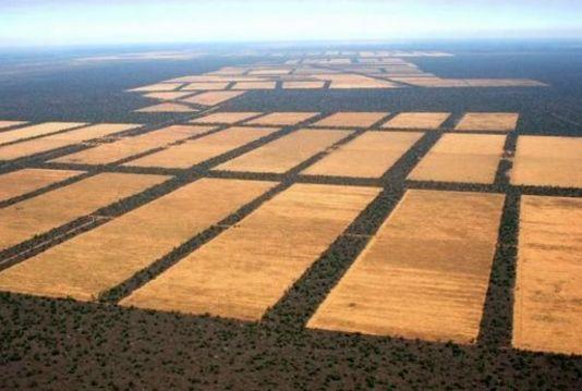 Single_full_deforestacion.jpg