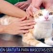 Thumb_mascotas.jpg