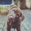 Thumb_perro.jpg