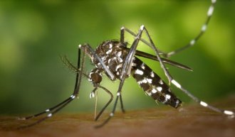 Featured_aedes.jpg
