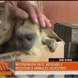 Thumb_animales.jpg