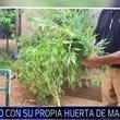 Thumb_marihuana.jpg