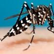 Thumb_mosquito_.jpg