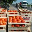 Thumb_tomates.jpg