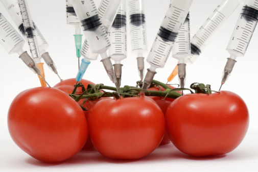 Los productos de Monsanto más peligrosos para la salud Regular_tomato_trans.jpg