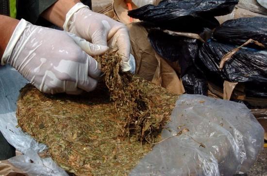 http://cdn.paraguay.com/photos/images/000/106/603/regular_marihuana_cargamento.jpg.jpg?1387829269