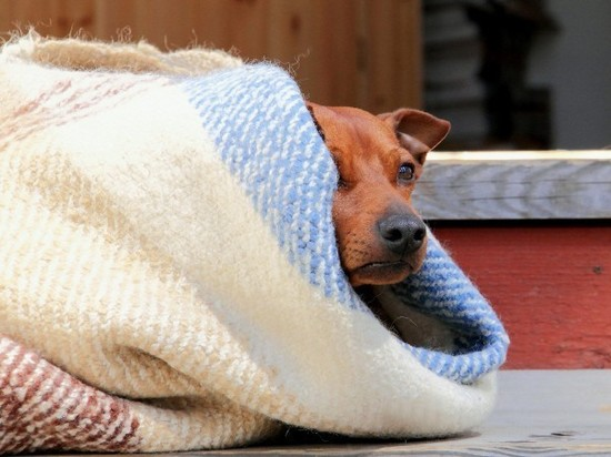 They also suffer the cold wave - Paraguay.com 1