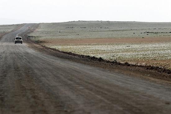 El desierto más seco del mundo se cubre de flores