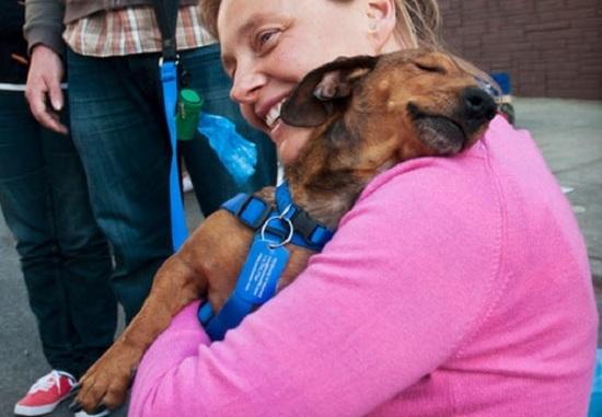 Otorgan licencia a mujer para que pueda cuidar a su perro enfermo — Inédito