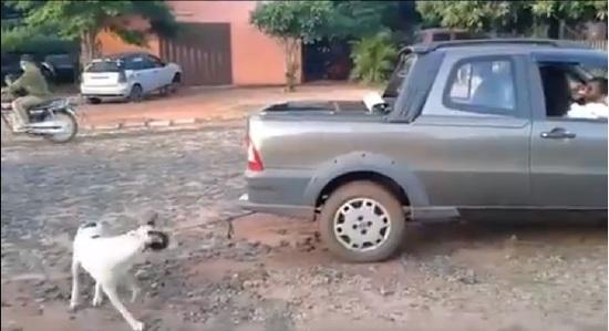 Ataron un perro a una camioneta y lo arrastraron hasta la muerte