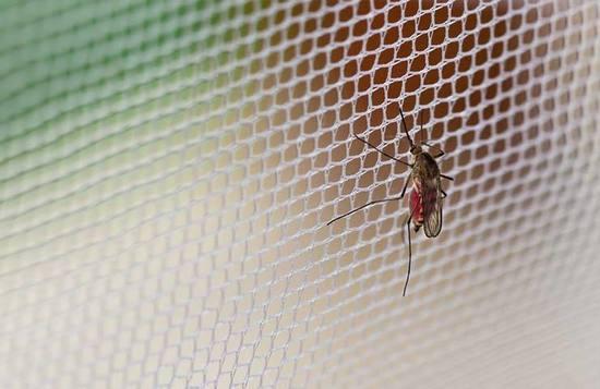 Salud confirma muerte de bebé por dengue