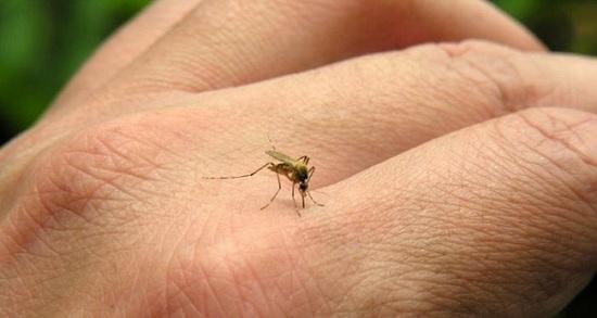 Piura en emergencia sanitaria ante riesgo de proliferación del dengue